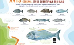 Etude scientifique poisson catalogne