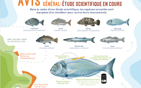 Etude scientifique poisson catalogne